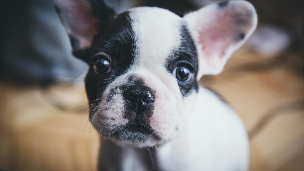 new puppy supply checklist