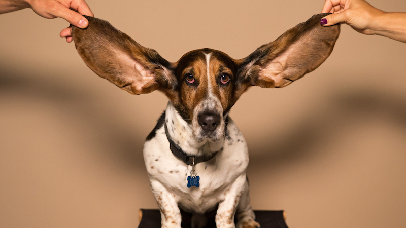 How To Clean Dogs Ears – Ear Infections